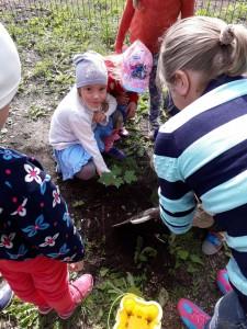 Кленовая аллея в детском саду 6.
